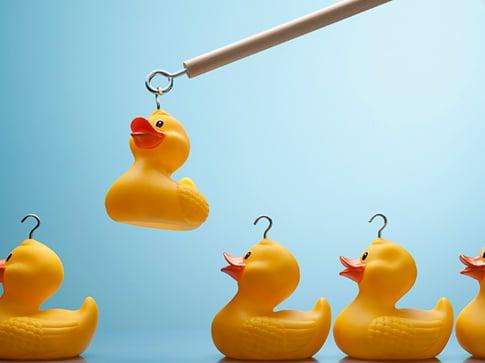 pick-a-duck.jpg