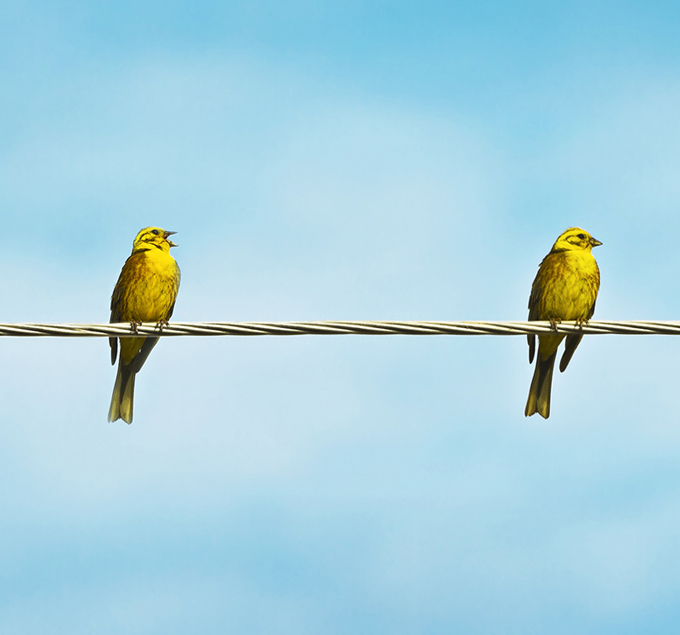 Two-Birds-Key-Employee-Motivator