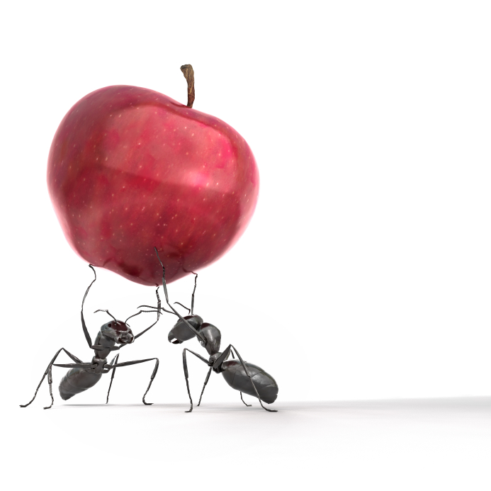 ants_apple