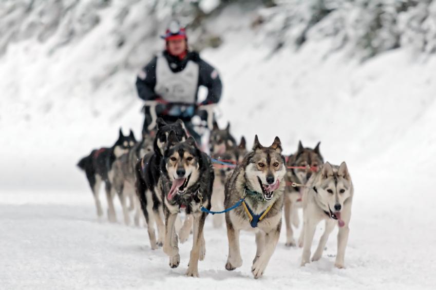 dog_sled