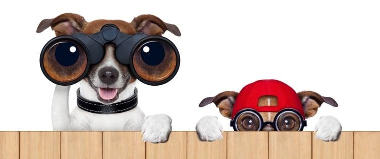 dogs_looking-056804-edited.jpg