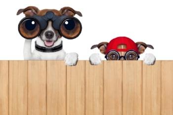 dogs_looking-539103-edited.jpg