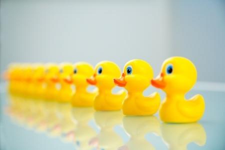 ducks_in_row.jpg