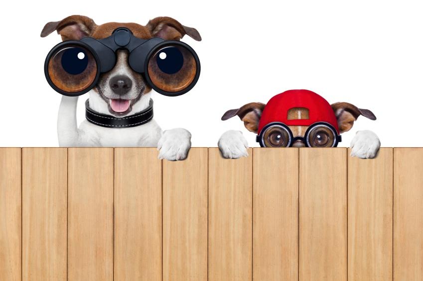 dogs_looking.jpg