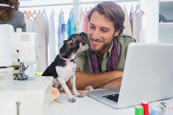 Cute chihuahua sitting on desk next to a fashion designer