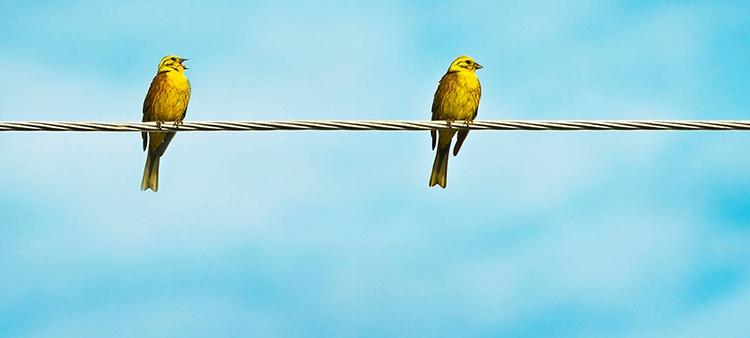 birds_on_a_wire_CS_1.jpg