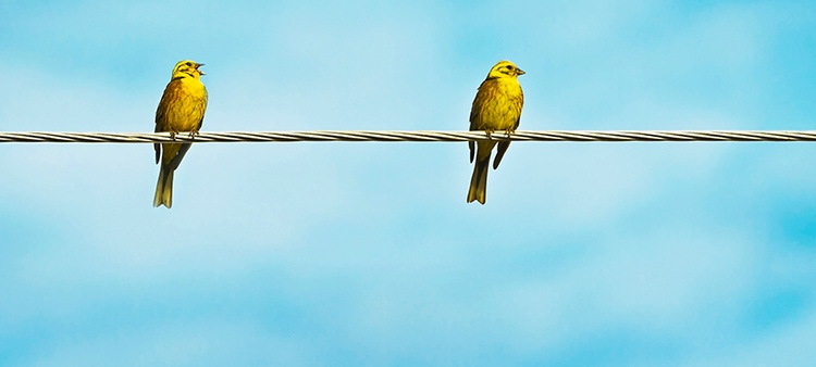 birds_on_a_wire_CS_1.jpg