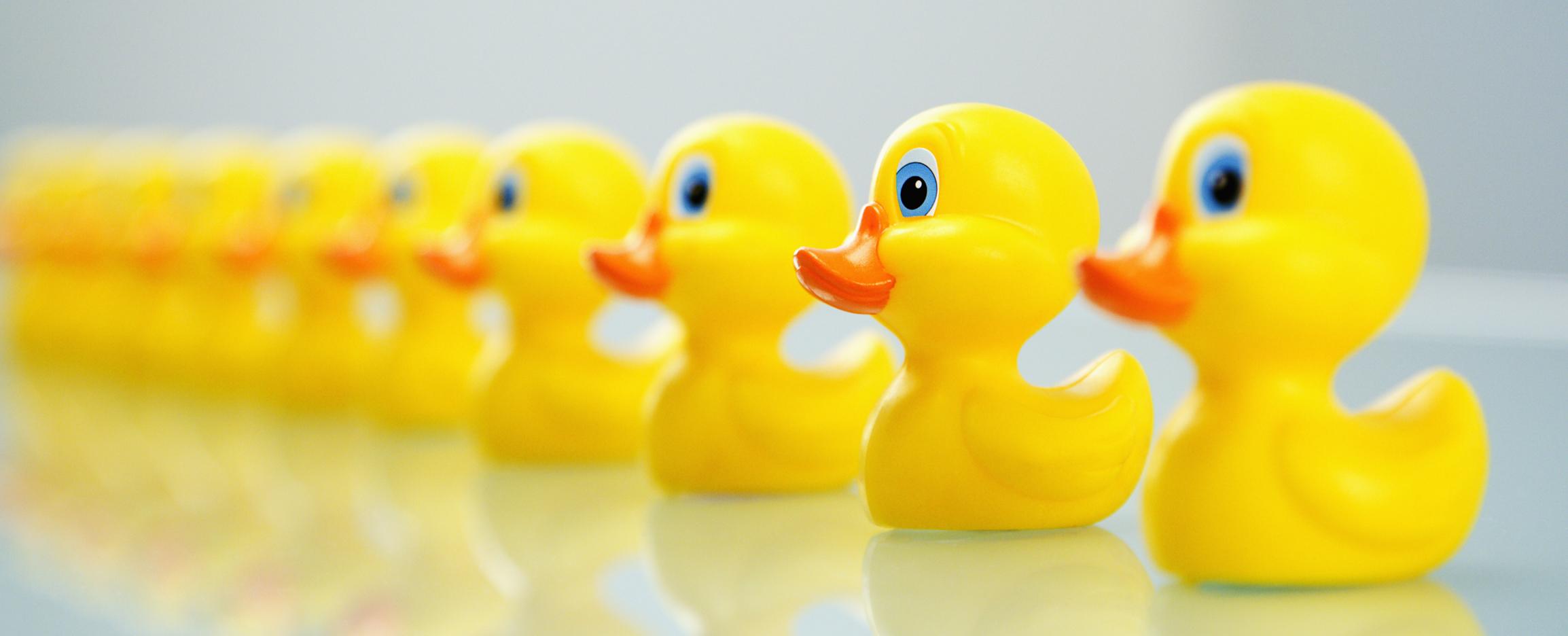 case_study_duck