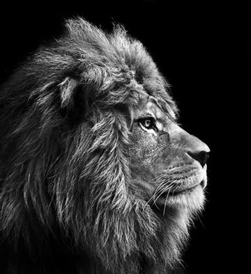 lion_cropped.jpg